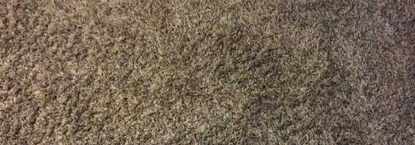 Enlever un tapis coll facilement le bricoleur - Comment detacher un tapis ...